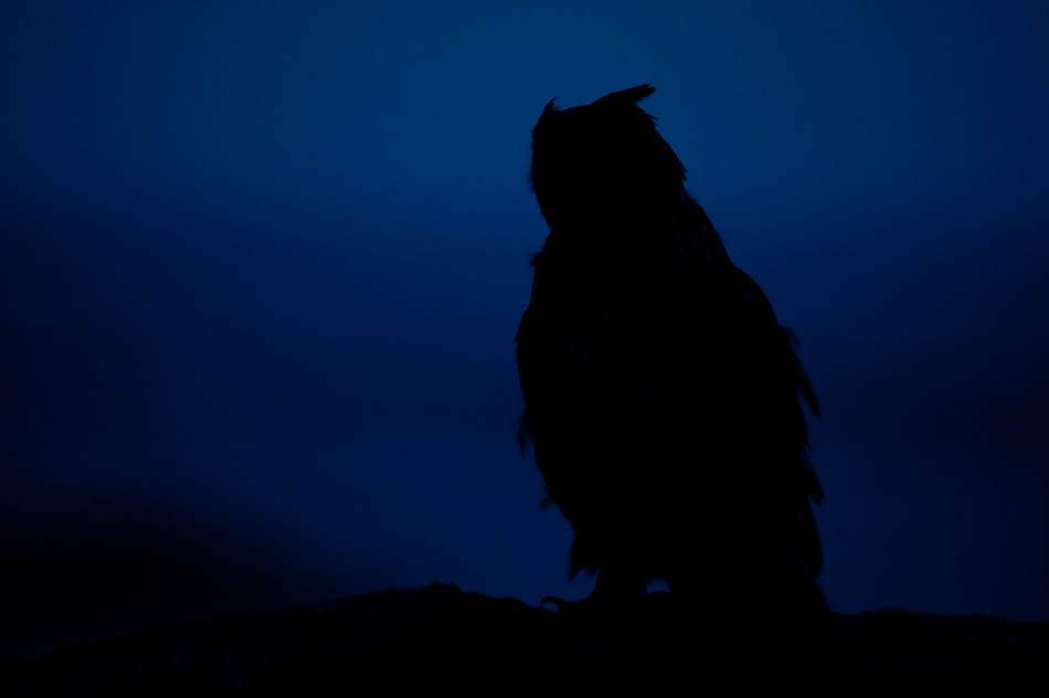 Roy Mangersnes - Eagle Owl at night