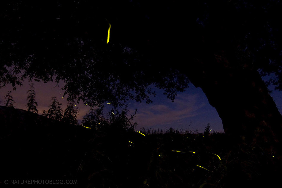 Bruno D'Amicis - Dance of the fireflies