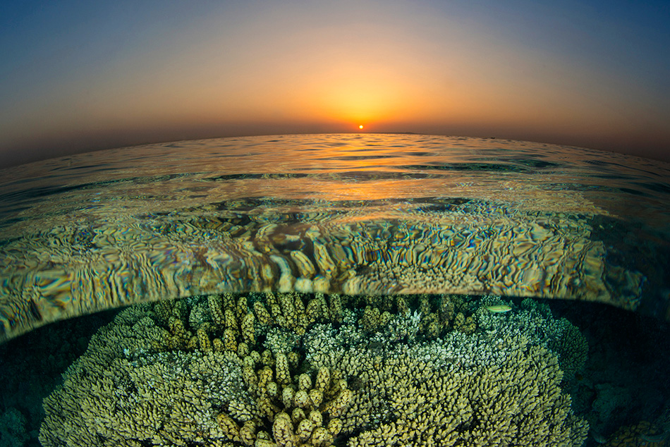 Alex Mustard - Coral Reef Sunset