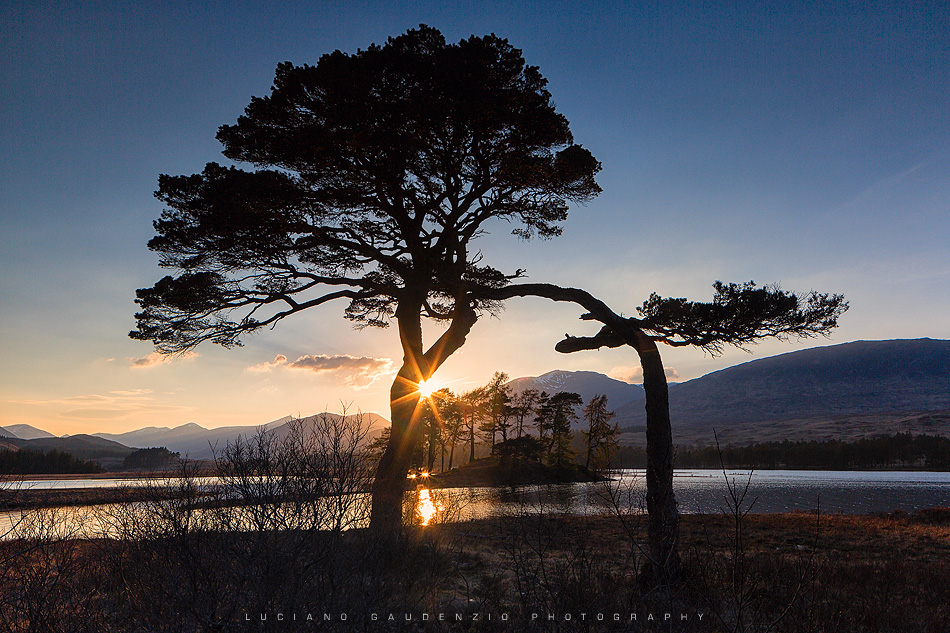 luciano gaudenzio - backlit scottish pines