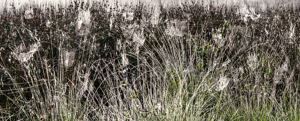 Theo Bosboom - Spider webs in tall grass