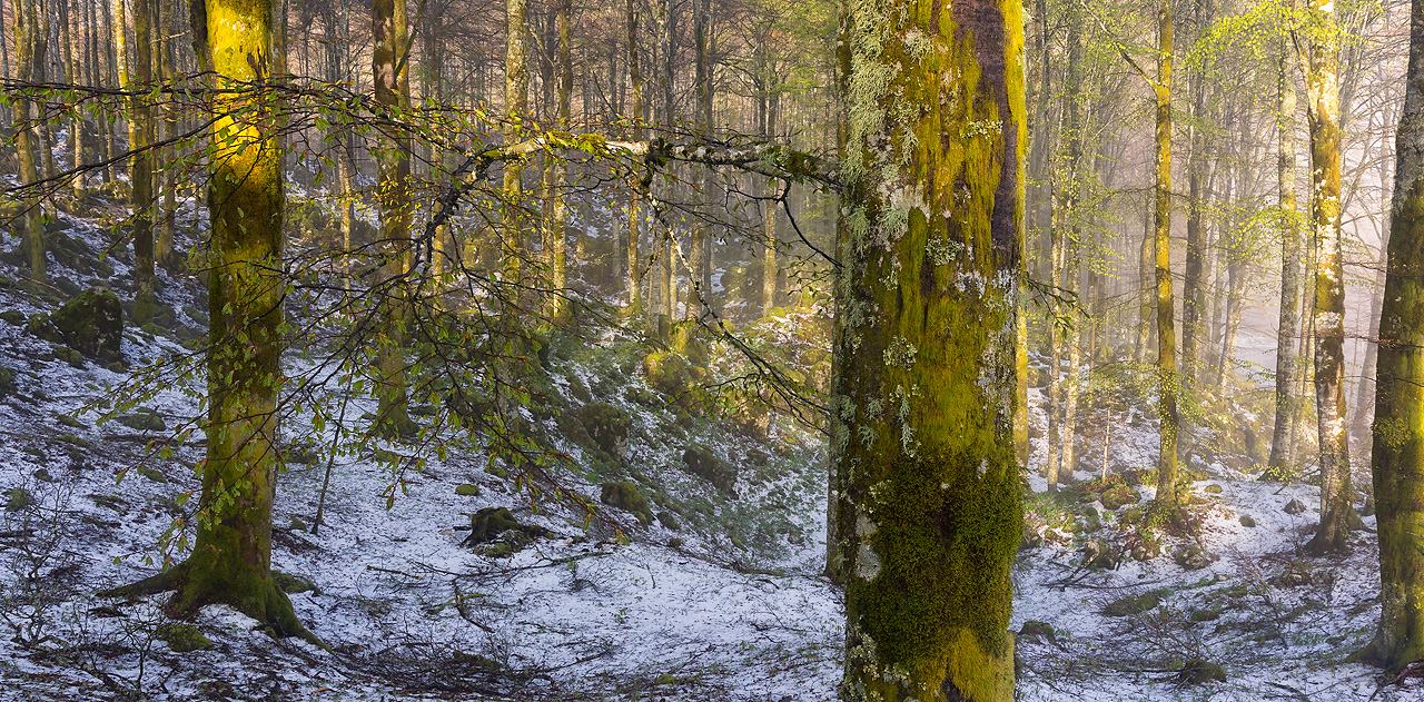 luciano gaudenzio - Inside the forest after an heavy hailstorm