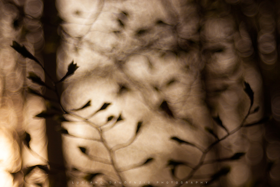 LUCIANO GAUDENZIO - FIRST LEAVES